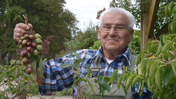 Ein älterer Herr mit weißen dichten Haaren und einer Brille, hält eine Rebe mit Kiwibeeren hoch.