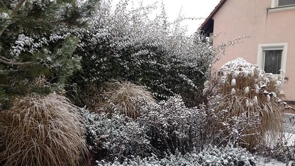 verschneite Hecke