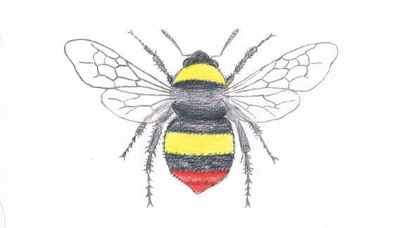 Zeichnung einer Wiesenhummel