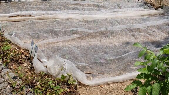 Gemüseschutznetz liegt über einem Beet