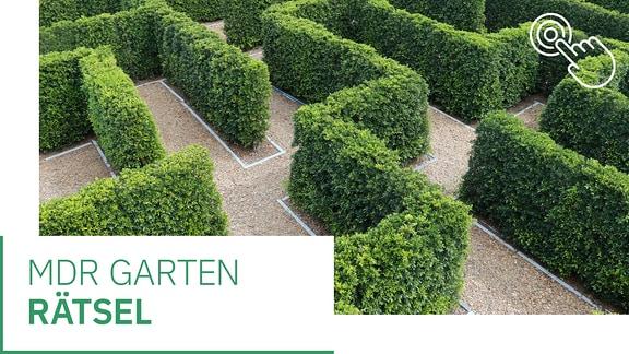 MDR Garten Teaser Quiz