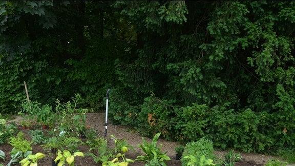 Schattenbeet liegt umgeben von einer Hecke unter hohen Bäumen