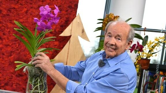 Ein älterer Herr mit blauem Hemd steht hinter einem Tisch mit vielen bunten Orchideen, er hält eine pinke Blüte in der Hand