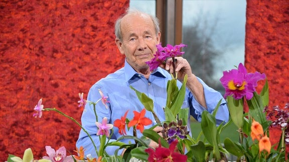 Ein Mann setzt eine pinke Orchidee mit sehr langen Wurzeln in ein Glas