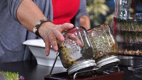 Eine Frau stellt ein Keimglas auf dem Kopf in eine Halterung, ein anderes Glas steht dort bereits