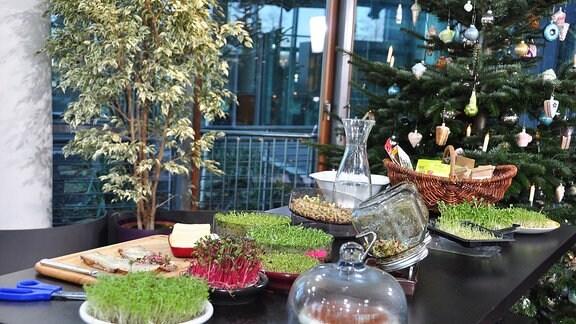 Auf einem Tisch stehen jede Menge Sprossen in verschiedenen Gefäßen, ein Brett mit Brot und ein Korb mit Saatgut ist auch zu sehen