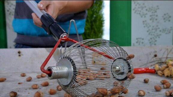 Arbeitshilfe Rollblitz - mit einer Drahtrolle werden Haselnüsse aufgesammelt