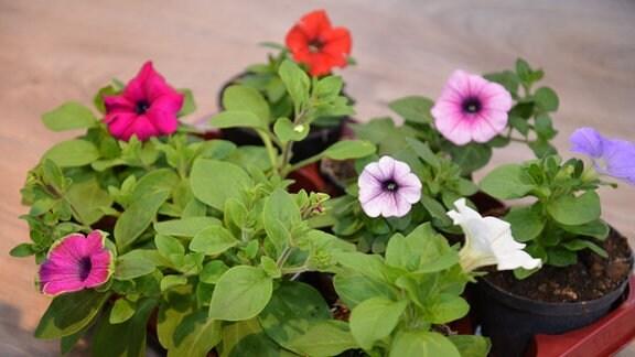 Blumenkasten mit kleinen Jungpflanzen