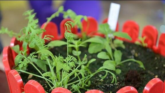 Sommerblumen im Blumenkasten