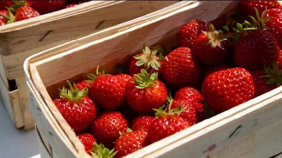 Große rote Erdbeeren im Korb