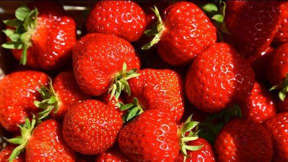 Große rote Erdbeeren