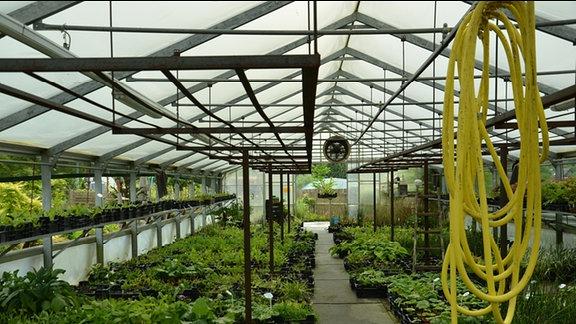 Blick in ein  Folienhaus mit Orchideen