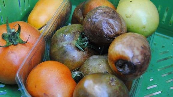 Eine Plastikschale mit bräunlichen, faulenden Tomaten