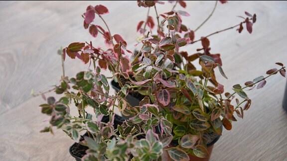 Blumentöpfe mit Pflanzen