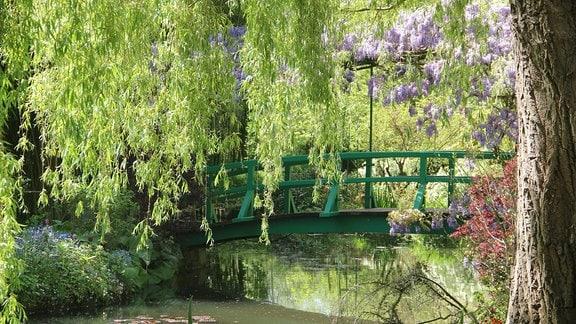 Eine grün gestrichene, von Blauregen überwachsene Holzbrücke führt über einen Teich im Monet-Garten in Giverny (Frankreich)