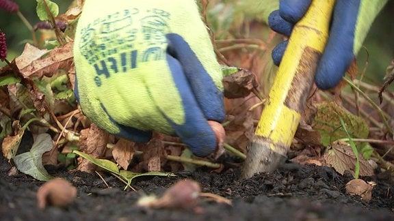 Mit einem Pflanzstock werden kleine Bölumenzwiebeln ins Beet gesetzt.