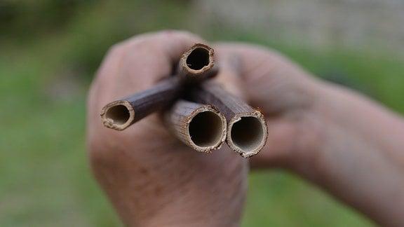 Eine Hand hält hohle Stängel