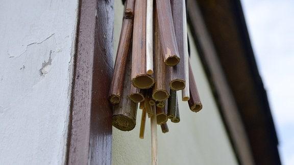 Hohle Stängel hängen an einer Wand