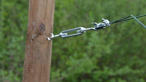 Ein Spannschloss spannt den Draht an einem Spalier