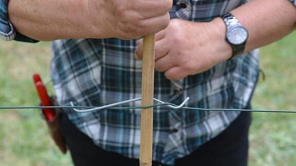 Der Bambusstab wird mit einem Draht am Spalier befestigt