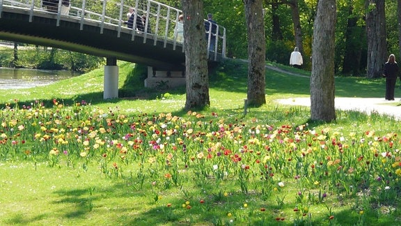 Parkwiese mit vielen bunten Tulpen.