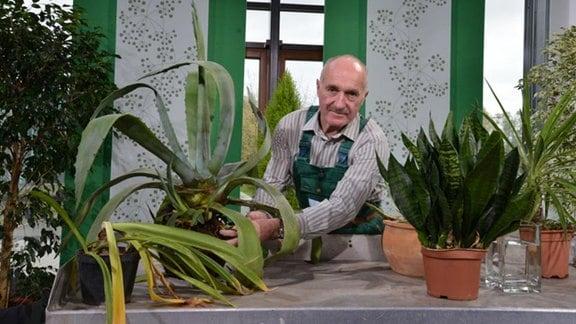 Jürgen Meister steht am Pflanztisch