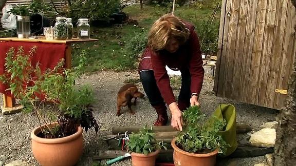 Carolas im Garten