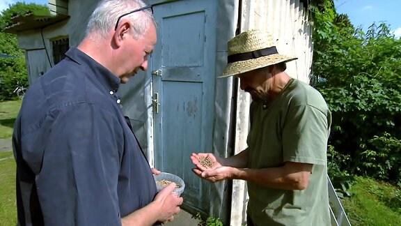 Zwei Männer begutachten Grassamen-Pellets