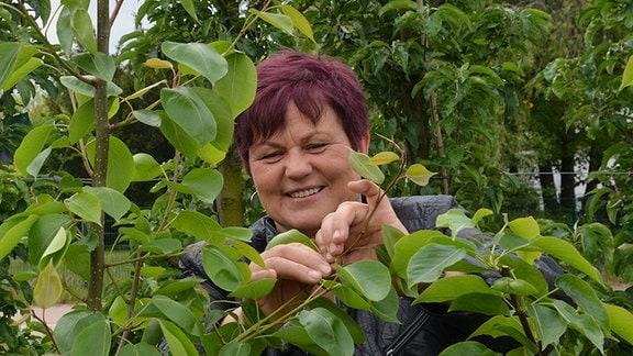 Gärtnerin Monika Möhler knipst einen Zweig ab und wird dabei gefilmt
