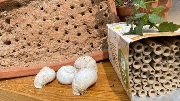 mit durchlöchertem Lehm gefüllter Blumentopf, ein Tetrapack mit hohlen Stängeln und Schneckenhäuser liegen auf einem Tisch