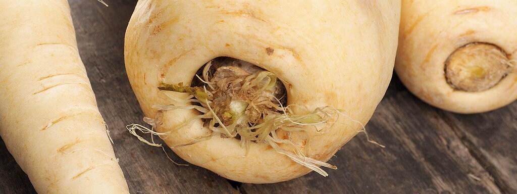 Geliebte Pastinake: Das Gemüse der Saison | MDR.DE #CN_45