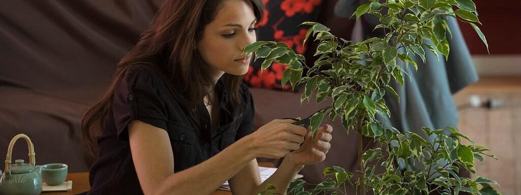 Zimmerpflanzen Fur Ein Besseres Raumklima Mdr De
