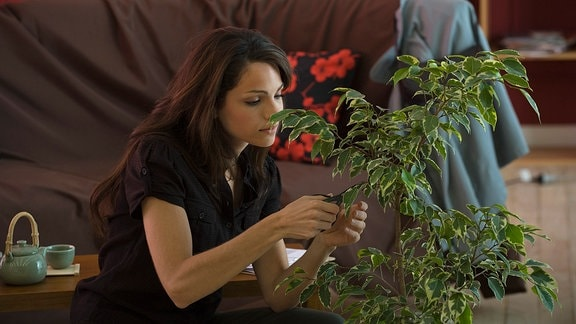 Pflanzen verbessern Raumklima