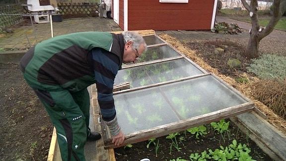 Ein Gärtner an einem Mistbeet.