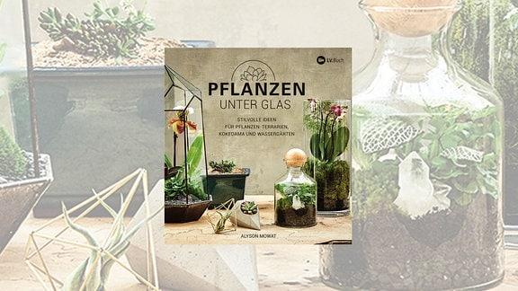 Verschiedene Pflanzen wurden in Gläser gesetzt