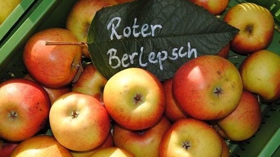 Äpfel der Sorte Roter Berlepsch
