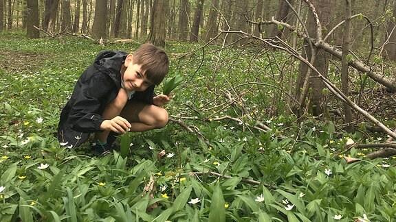 Ein Junge hockt im Wald auf dem Boden, aus dem längliche, grüne Blätter vom Bärlauch sowie weiß blühende Buschwindröschen sprießen