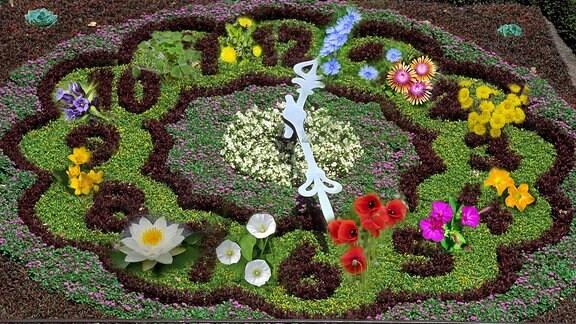 Collage Blumeunhr nach Linne mit verschiedenen Blüten