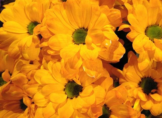 Bedeutung gelbe rose