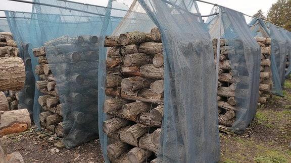 Holzstämme aufgeschichtet zur Pilzzucht.