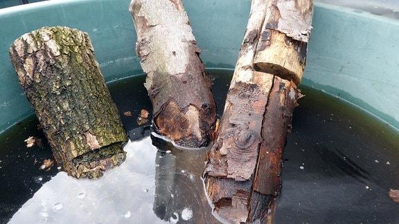 Holzstämme in einem Wasserbottich.