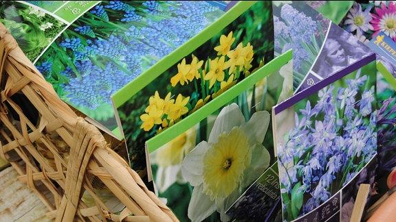 Etiketten verschiedener Blumenzwiebeln in einem Korb