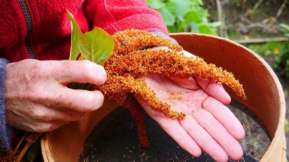 Über einem runden Sieb mit Holzrand hält eine Frau eine orangene Pflanze.