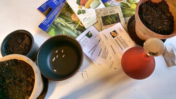 Tütchen mit Gurkensamen, Pflanztöpfe mit Erde und eine Ballbrause stehen auf einem Tisch.