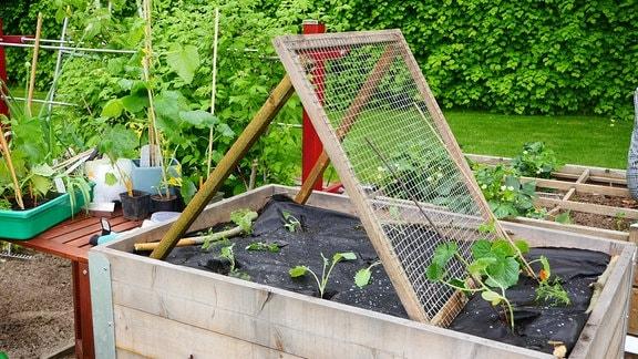 Ein Hochbeet mit Holz-Drahtgestell und Gemüse-Jungpflanzen.