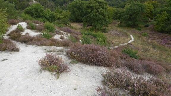 Heidelandschaft im Südharzer Karst bei Questenberg