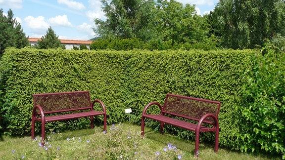 Zwei Gartenbänke vor einer Hecke aus Hemlocktanne