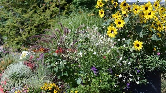 Auf einem Beet blühen verschiedene Pflanzen