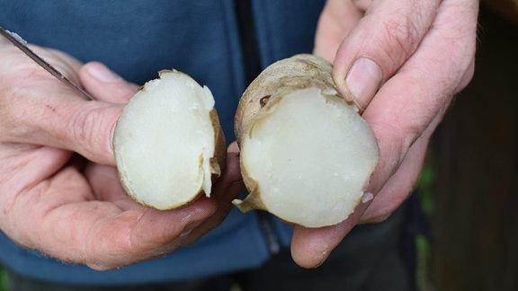Eine aufgeschnittene Kartoffel der Sorte Rosa Tannenzapfen.