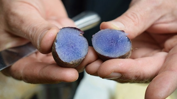 Aufgeschnittene Kartoffel der Sorte Blaue Anneliese.